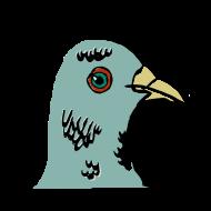pigeon de rue atelier kôta illustration dessins boutique produits artist