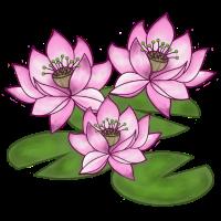 Drei Lotusblumen