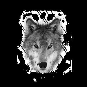 wolf - wero