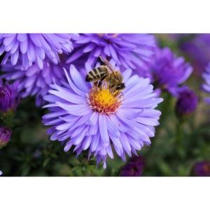 wertvolle Biene