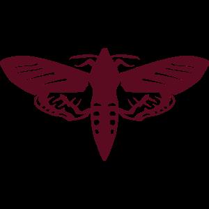 Nachtfalter Insekt Nacht 1