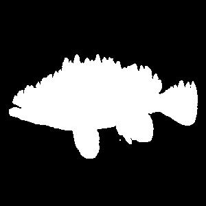 Angeln Fisch Angler Wald Bach