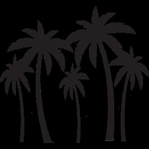 Palmen Strand Meer Sommer Blätter Palme Urlaub