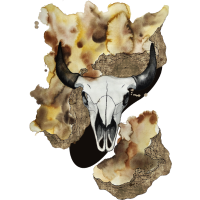 Buffalo skull by carographic
