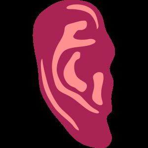 menschliches Ohr 12