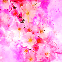japanische Kirschblüte wsstd