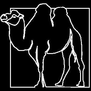 Kamel Kamele Wüste Premium Design Geschenk