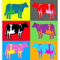 kuh kühe bunt multicolor