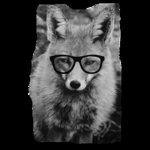 Fuchs mit Nerdbrille / Fox / Brille / Foto / Bild