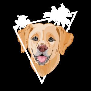 Hund Golden Retriever