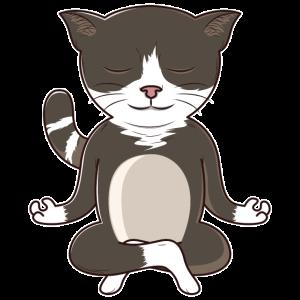 Meditierende Yoga Katze Im Schneidersitz