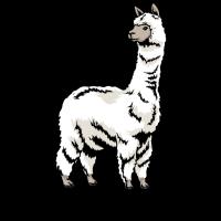 Alpaka Kamel