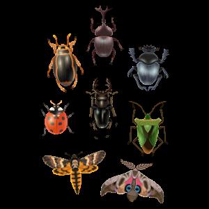 Motte Insekten Schmetterling Wanze Insekt Geschenk