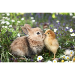konijnen afdruk/print