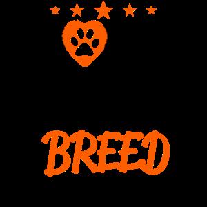 Hunde adoptieren Hundeadoption Adopt dog Tierheim