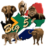 Big 5 - Südafrika Safari
