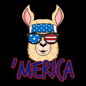 Amerika Lama Alpaka