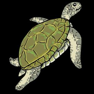 Schildkröte Meerestiere Strand