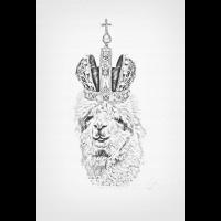 Cooles Alpaka Poster - Alpaka Zeichnung