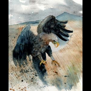 Aquarell Adler