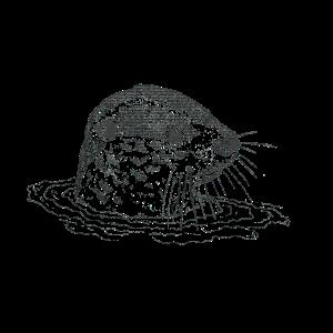 Otter im Wasser