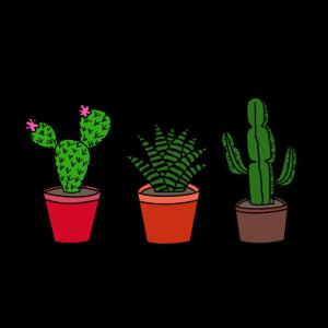 Kakteen, Kaktus
