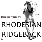 Home is where my Rhodesian Ridgeback is