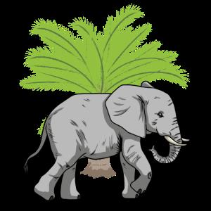 Elefant Elefanten Wildnis Wildtiere Tiere
