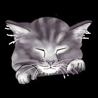 Katze, Kätzchen