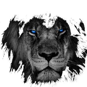 Löwe in schwarz weiß mit leuchtend blauen Augen.