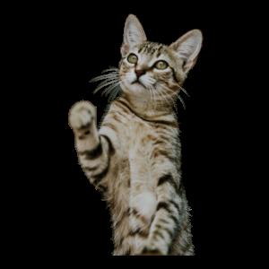 Coole niedliche Katze Katzenfreund