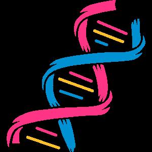 Die Struktur eines DNA-Moleküls