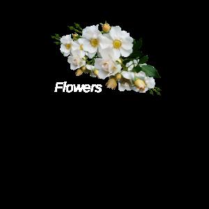 Blume,Blumen,Sommer,Garten,pflanzen,modisch,modern