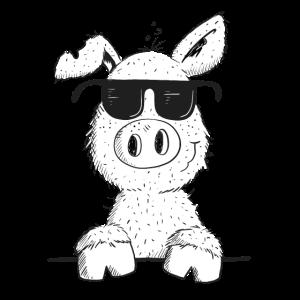 Cooles Schwein mit Sonnenbrille I Schweinchen