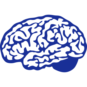 Gehirn Gehirn 1 2