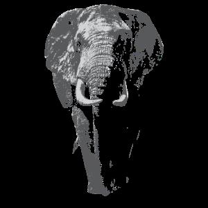 Afrikanischer Elefant Tierschützer