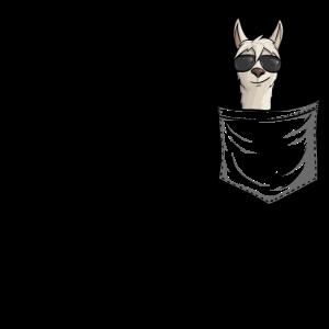 Hipster Alpaka mit Sonnenbrille | Lama in Tasche