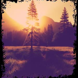 Baum Lichtung Sonnenschein