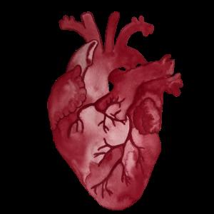 Herz Aquarell Anatomie Mediziner
