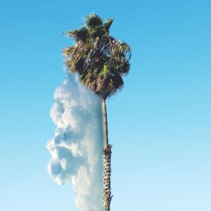 Eine Palme in den Wolken