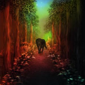 Der einsame Wolf in der Nacht.