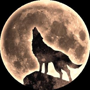 Heulender Wolf mit Vollmond im used look