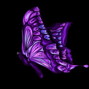 Schmetterling Falter Violett Lila Geschenk