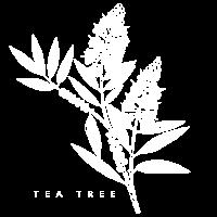 Tea tree Pflanzen Zeichnung Teebaum