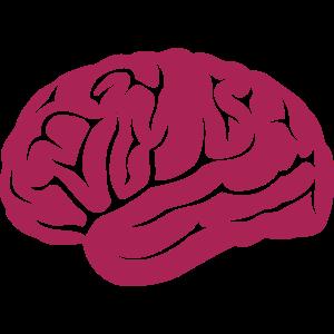 Gehirn Gehirn 14