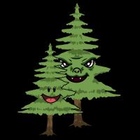 Wald Natur Baum Bäume Tanne Tannenbaum Tannen