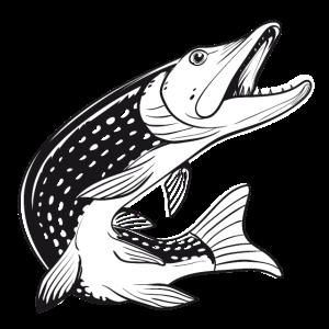 Fisch - Hecht - Fischen - Angeln - Fischer