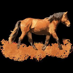 Reiten Pferd Pferde Pferdenarr Pferdenärrin Reiter