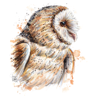 SM Eule | owl