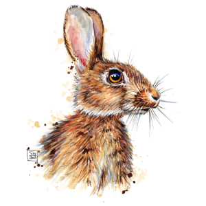 SM Kaninchen   rabbit